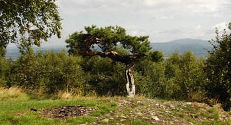 Jedlnik Panorama
